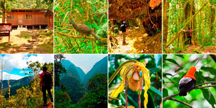 El Parque Nacional Yanachaga Chemillen